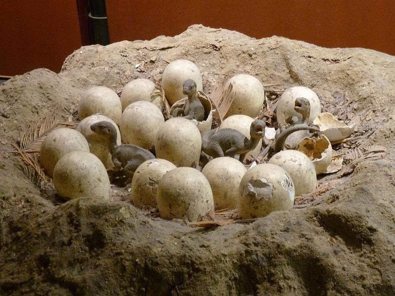 Dinosaur Nest With Eggs