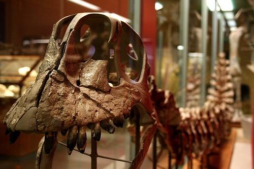 Dinosaur 3D Modeling